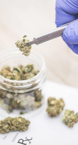 """Medical Marijuana """"RX"""" Prescription"""
