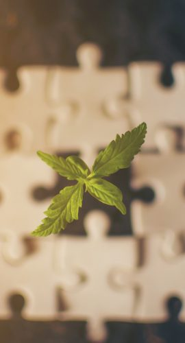 Medical Cannabis Plant in a Puzzle